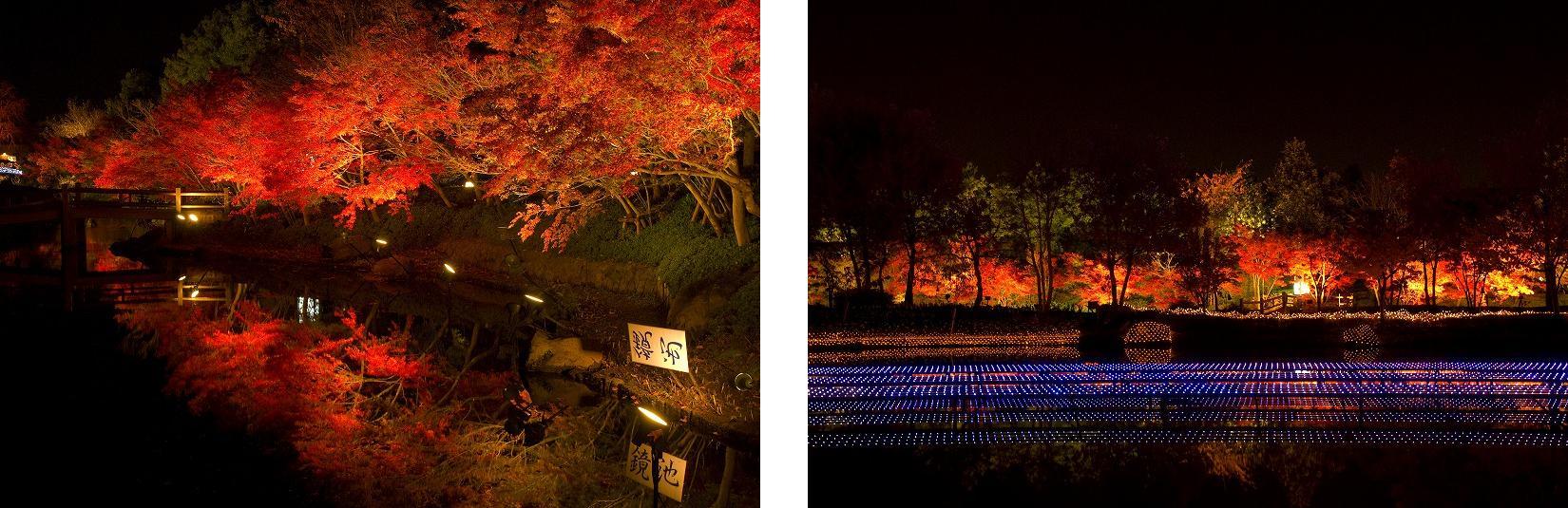 「紅葉」と「ライトアップ」