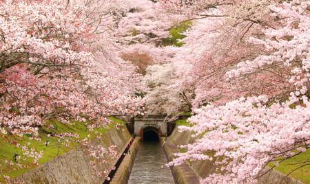 「琵琶湖疏水通船」が67年ぶりに本格運航を開始 ~2月1日(木)から乗船チケットの予約受付・販売を開始~