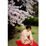 OHANAMI(cherry blossom viewing)&Tea ceremony in Shinjuku Gyoen