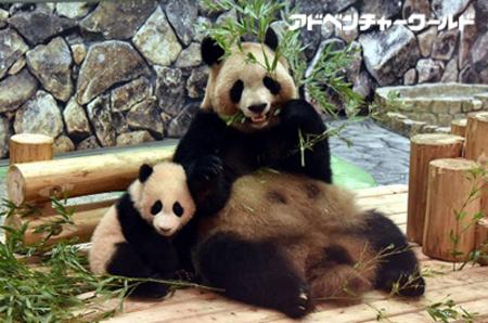 3月3日(金)ひなまつり パンダの赤ちゃん「結浜(ゆいひん)」にすべり台と木登り遊具をプレゼント!
