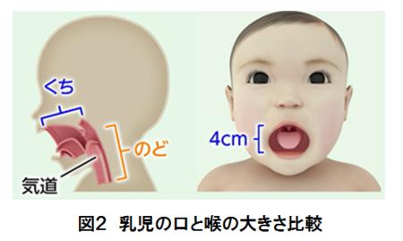 図2 乳児の口と喉の大きさ比較